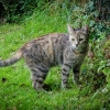 Friendly young female cat found north Cork city-