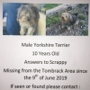 Yorkshire Terrier missing Wexford Ferns area