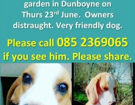 missing beagle (billy)