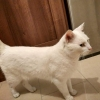 White cat found
