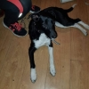 Collie X found in Cork