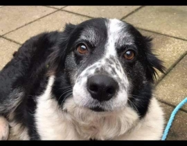Lost dog ballymote Co Sligo