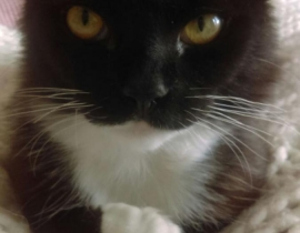 Cat, lost since Oct 8th in Portbello, D8