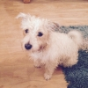 Missing terrier found in Renmore area, Galway