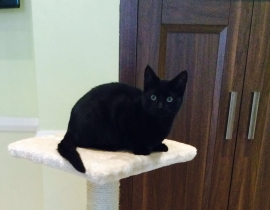 Female black cat missing from crumlin