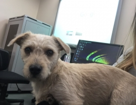 lost young Terrier