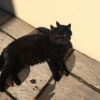 Black cat - male - lost early December in Straffan,