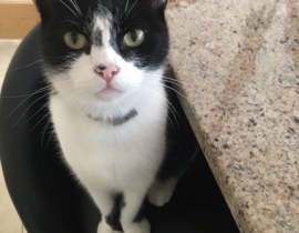TUX Missing Black and White Cat