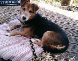 Male terrier cross found on N22 near Crookstown