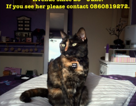 Lost cat - Hermione