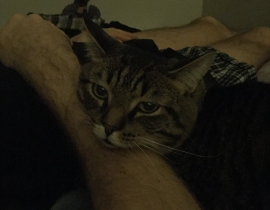 Brown Tabby Male Cat Lost in Carrickmines