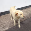 Lab missing from Waterfall Cork