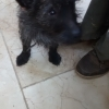 Dog found yesterday 13th March