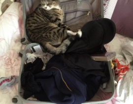 TABBY CAT LOST ROSSLARE EUROPORT 20 12 2017