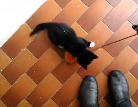 Black and White Kitten Found County Cork, ? Lost Pet