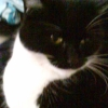 Kitty - missing cat since 16/03/2015