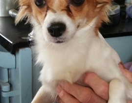 Yound male dog found in Dun Laoghaire Area no chip or Collar under weight.