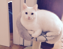 Lost white cat at Dublin airport