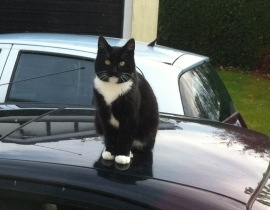 Male cat missing from Greystones, Co. Wicklow