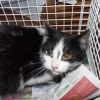 Balck & white female cat found in Little Island