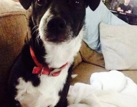 Lost Dog, Black and white