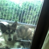 Husky found in Waterford