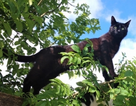 Thin black cat missing from Brusna, Ballaghaderreen RN