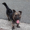 Dog found in Raheny but seen in Donamedge and Clarehall