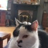 Moo Moo Lost in Aughnacliffe Co. Longford