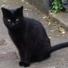 Black Cat Missing from Moyne Road Ranelagh since Tuesday 24th March 2015 pm