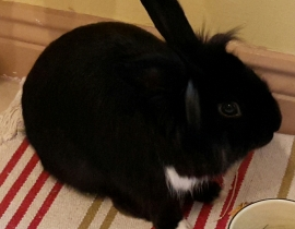 Rabbit found in Carpenterstown area