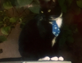 Lost Cat Dublin (Griffith Ave area)