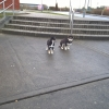 Two puppies in Athlone Sports Center