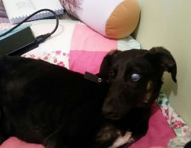 Black female dog found in Royal Canal Park