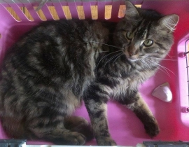 Lost Cat Youghal