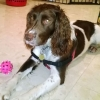 Lost Springer N.Tipp