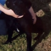 Small black dog - last seen around Araglin, Co Cork
