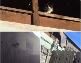 3 cats found