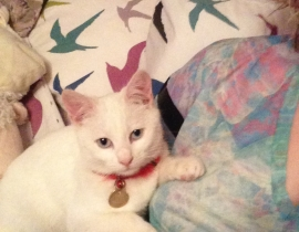 white cat missing dublin 17 area, coolock.