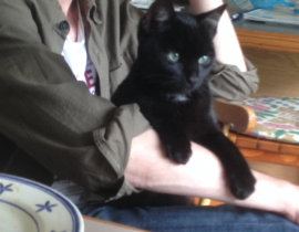 LOST BLACK MALE CAT
