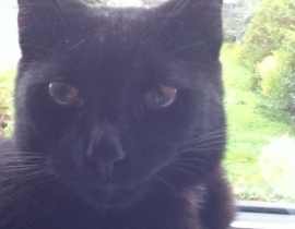 Beloved cat missing