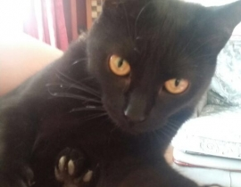 Black cat answers to nelly still missing