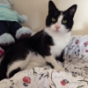 Male cat lost in Sallynoggin, Co Dublin