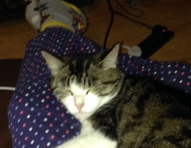 female 3 year old cat missing from Mayfield Cork