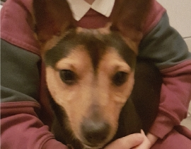 Dog found Tyrrelstown Dublin 15 26th Jan 2018