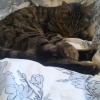 LOST GREEN/BLACK TABBY CATGRANGE/AMBERLEY AREA CORK