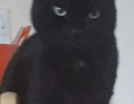 Lost black cat - leixlip