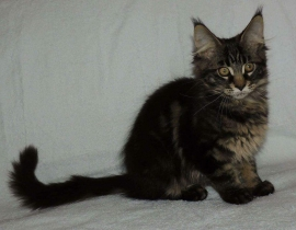 LOST CAT-KITTENOur cat ran away from the house in Hazelbury Park on Sunday 5thof June. 5 month old.
