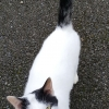 Cat found in Annaduff, Carrick on Shannon, Leitrim