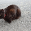 Black Cat with Red collar